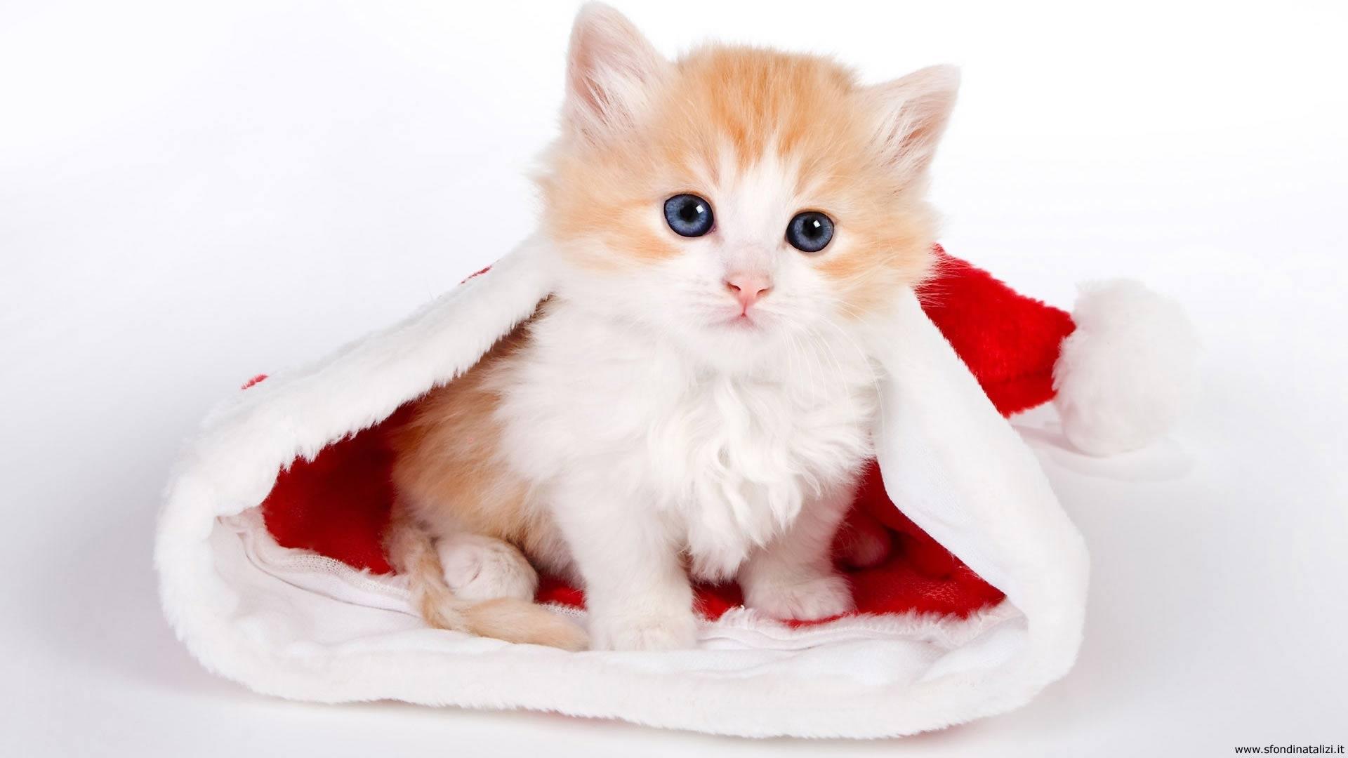 Sfondo Natalizio - Sfondo desktop Gattino di Natale