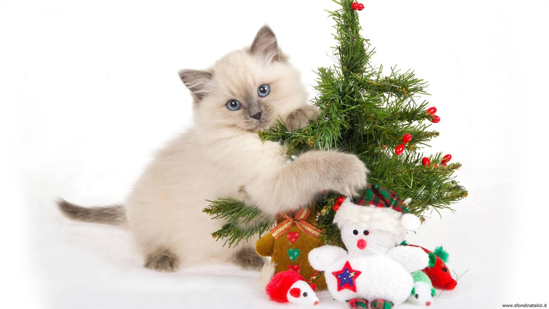 Sfondo Natalizio - Sfondo desktop Gattino Natale