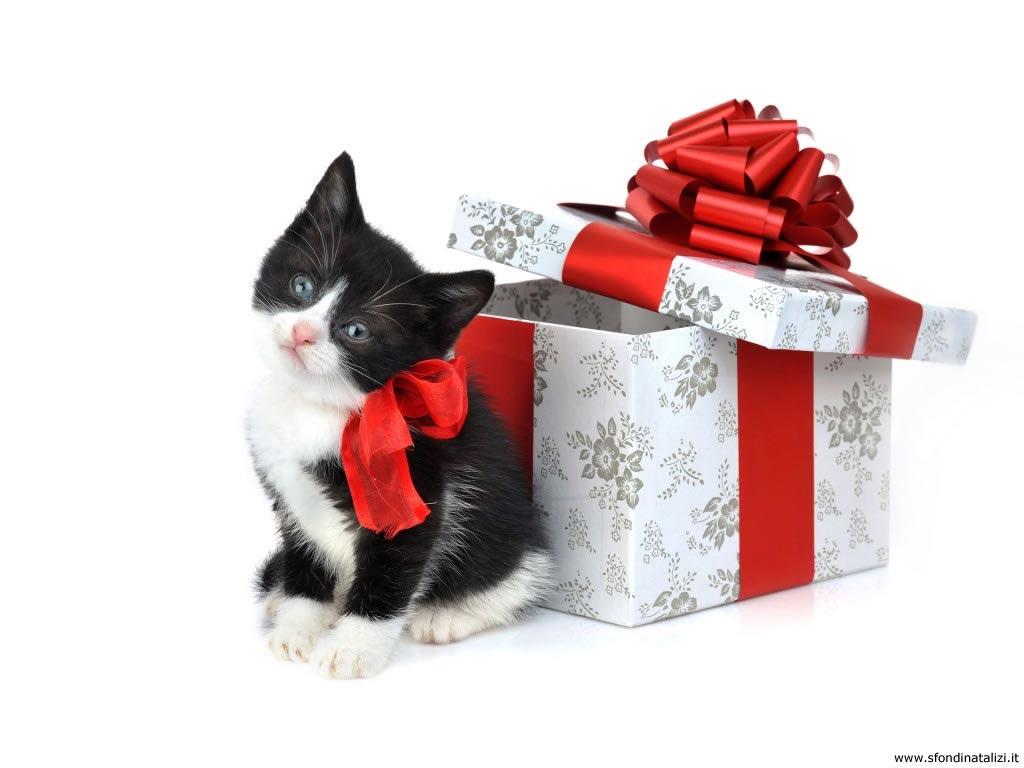 Sfondo Natalizio - Sfondo di Natale gattino