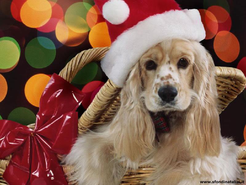 Sfondo Natalizio - Sfondo natalizio